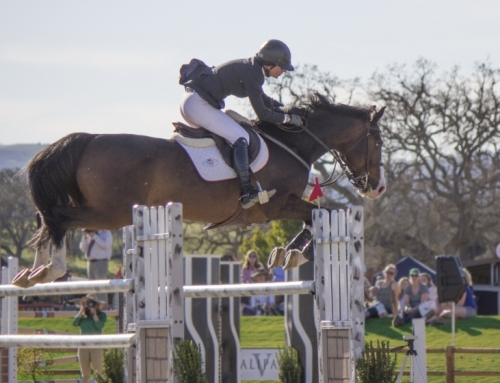 Paso Robles Horse Park's Shows Approved by NorCal Hunter/Jumper Association – 1/15/15