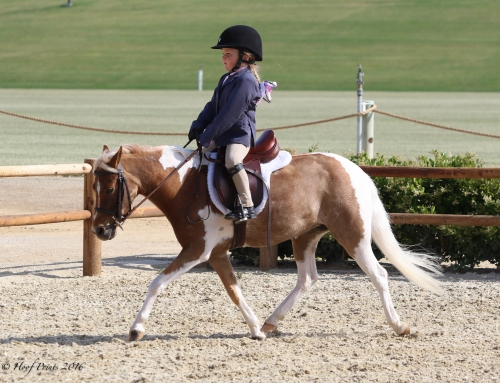 Paso Robles Horse Park Gears Up for First Kickoff Show May 9-10 – Spring/Summer Edition 2015