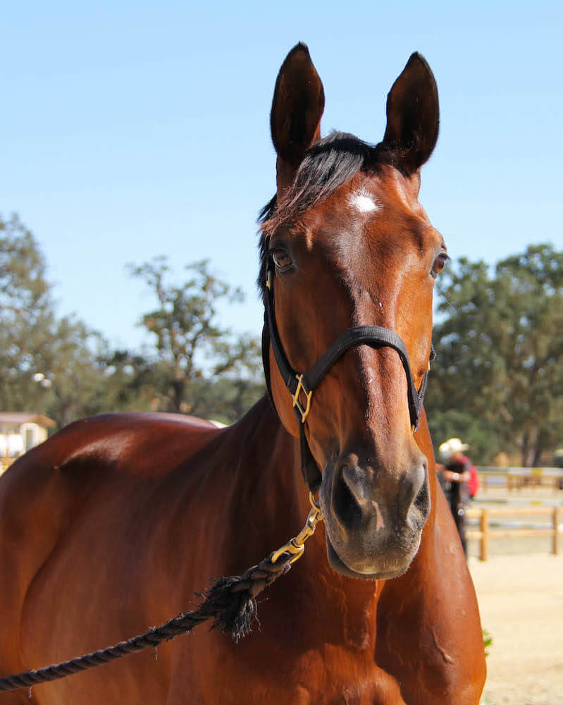 New Horse Park Breaks Ground in Paso Robles – 2/25/14